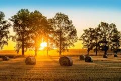 Campo do verão do nascer do sol Fotos de Stock Royalty Free