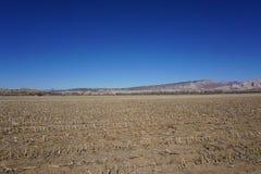 campo dopo il cereale di taglio Fotografia Stock Libera da Diritti