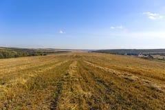 Campo dopo l'annata del raccolto rurale Fotografie Stock