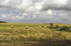 Campo dopo la raccolta del grano prima della tempesta Fotografia Stock Libera da Diritti