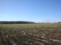 Campo dopo la raccolta nel cielo blu del fondo immagini stock libere da diritti