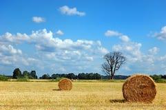 Campo dorato con le balle di fieno rotonde e l'albero guasto Fotografie Stock Libere da Diritti