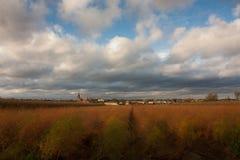 Campo dorato nei Paesi Bassi Fotografia Stock