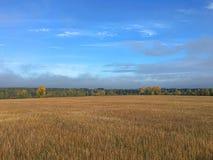 Campo dorato sotto il cielo blu immagini stock libere da diritti