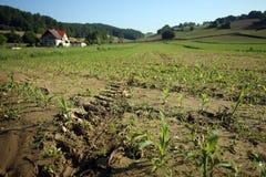 Campo dos brotos no lado do país agricultura Fotos de Stock Royalty Free