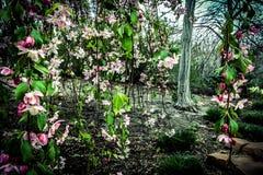 Campo dos daffodils Imagem de Stock