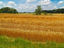 Campo dos fazendeiros Imagens de Stock