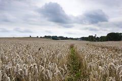 Campo dos fazendeiros com trilhas do trator Fotos de Stock Royalty Free