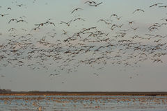 Campo dos pássaros Fotos de Stock