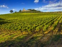 Campo dos vinhedos de Toscânia imagens de stock royalty free