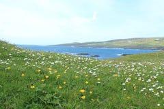 Campo dos wildflowers que negligenciam o Atlântico no Galway Penisula, Irlanda Foto de Stock