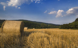 Campo dourado Foto de Stock