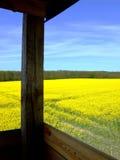 Campo dourado da colza (violação) de uma torre de vigia Fotografia de Stock Royalty Free