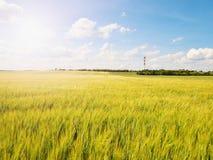 Campo dourado da tarde da cevada The Sun acima dos esmaltes do horizonte sobre um campo novo da cevada Fotos de Stock