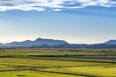 Campo dourado do arroz Imagem de Stock Royalty Free