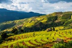 Campo dourado do arroz dos terraços, uma beleza natural bonita na montanha em Nan, Khun Nan Rice Terraces, Boklua Nan Province, T Foto de Stock Royalty Free