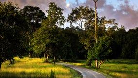 Campo dourado em Khaoyai Tailândia Foto de Stock