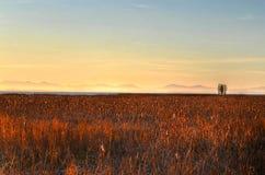 Campo dourado no por do sol Fotos de Stock