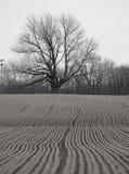 Campo e árvore Imagens de Stock