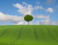 Campo e árvore Imagens de Stock Royalty Free