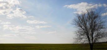Campo e árvore Foto de Stock Royalty Free
