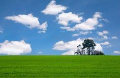 Campo e árvore verdes Fotografia de Stock