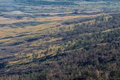 Campo e árvores Foto de Stock