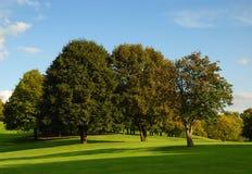 Campo e árvores verdes fotografia de stock royalty free