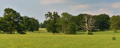 Campo e árvores verdes Imagens de Stock Royalty Free