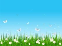 Campo e borboletas gramíneos Foto de Stock