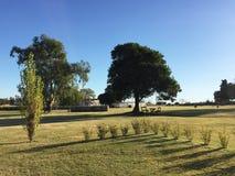 Campo e céu azul Imagem de Stock
