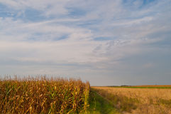 Campo e céu de milho Foto de Stock