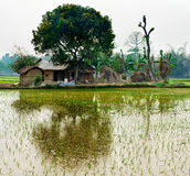 Campo e cabana verdes do arroz Foto de Stock Royalty Free