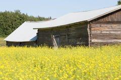 Campo e celeiro do Brassica Imagem de Stock Royalty Free
