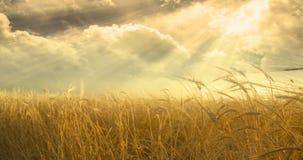 Campo e cielo Immagine Stock Libera da Diritti