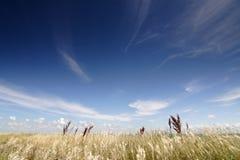 Campo e cielo Immagini Stock Libere da Diritti