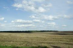Campo e cielo blu Fotografie Stock Libere da Diritti