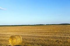 Campo e cielo blu agricoli Immagine Stock