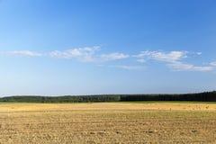 Campo e cielo blu agricoli Fotografia Stock
