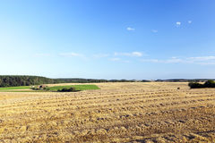 Campo e cielo blu agricoli Immagine Stock Libera da Diritti