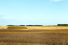 Campo e cielo blu agricoli Fotografie Stock