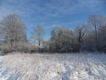 Campo e cielo blu congelati Immagini Stock