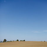 Campo e cielo blu di cereale Immagine Stock