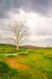 Campo e cielo blu di erba Fotografia Stock Libera da Diritti