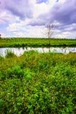 Campo e cielo blu di erba Fotografie Stock