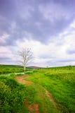 Campo e cielo blu di erba Fotografia Stock