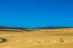 Campo e cielo blu gialli Immagine Stock Libera da Diritti