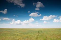 Campo e cielo blu selvaggi verdi Immagini Stock Libere da Diritti