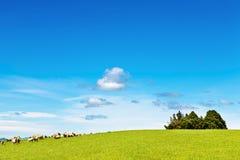 Campo e cielo blu verdi Fotografia Stock Libera da Diritti