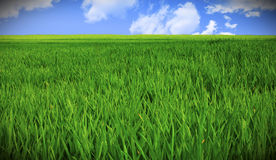 Campo e cielo di erba Fotografia Stock Libera da Diritti
